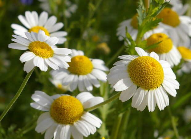 Полезные травы для женского здоровья