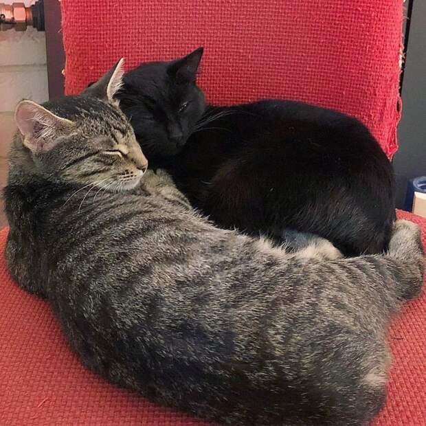Коты тоже иногда внезапно утихомириваются и решают стать друзьями дружба, животные, коты, кролик, попугай, собака, черепаха