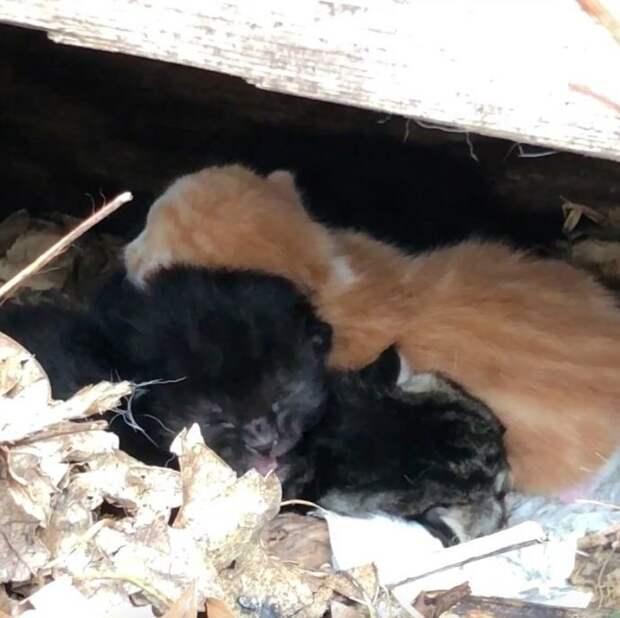 «Про котят мы узнали случайно…» Дикая кошка не хотела отдавать малышей, спрятанных под стеной!