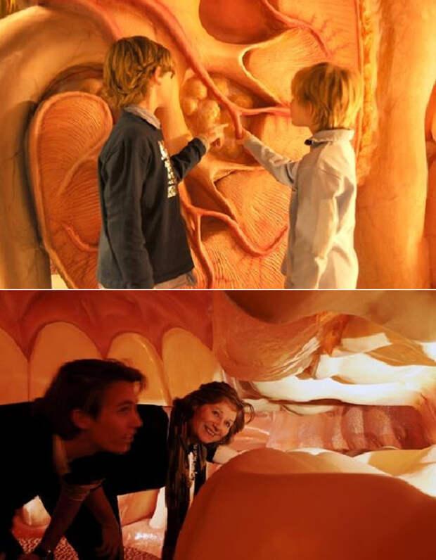 Прогулки внутри человеческого тела
