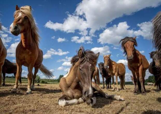 Животные в фотографиях (20 фото + 1 видео)