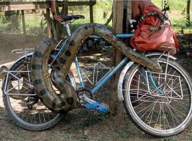 И наконец, как вам такой велосипедный замок? в мире, вещи, кража, люди, прикол, юмор