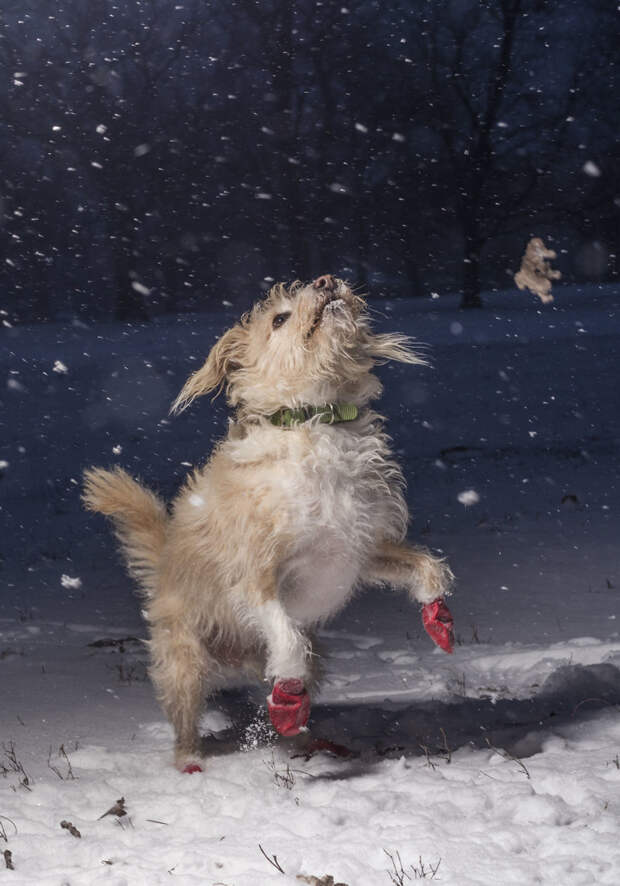1 место среди юных фотографов 11-17 лет - Джулиан Готтфрид, США Кеннел клаб, животные, конкурс, лондон, портрет, собаки, фото, фотография года