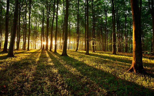 Лесной фонд Тверской области увеличат почти на 13 тысяч гектаров