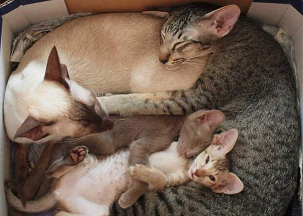 Коты учат, как правильно проводить время в кругусемьи