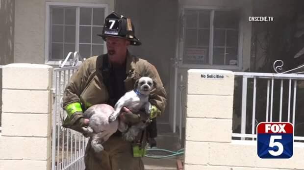 В Калифорнии храбрый пожарный вытащил из огня двух собак