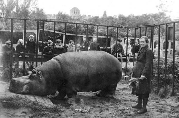 Почему у европейцев нет бегемотов Ленинградской породы