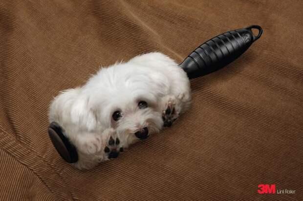 3M Lint Roller: Dog , 3M, Grey Singapore, 3M Company, Печатная реклама