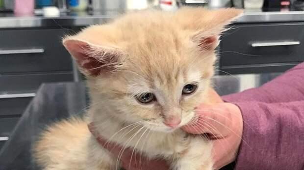 Фото рыжей крохи не могло оставить равнодушным: на снимке был запечатлён робкий котёнок с опущенной головкой