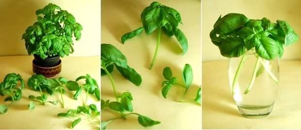 15 овощных культур, которые можно выращивать дома на подоконнике