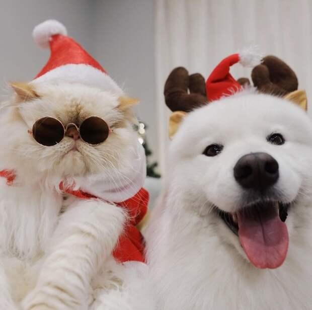 Милота дня: собака-улыбка и угрюмый кот, которые обожают друг друга