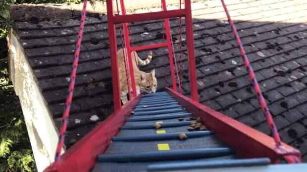 Но Крис так просто не сдался. Он придумал хитрый способ приманить Реджи на мост — рассыпал по нему корм в мире, животные, забота, история, кот, люди