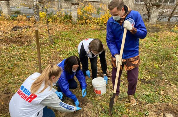700 саженцев кедров высадили активисты на территориях нижегородских школ