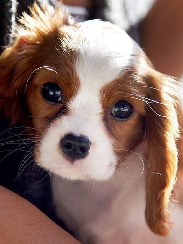 Милый щенок - Картинки - Красивые картинки, прикольные статусы и стихи Top Dream