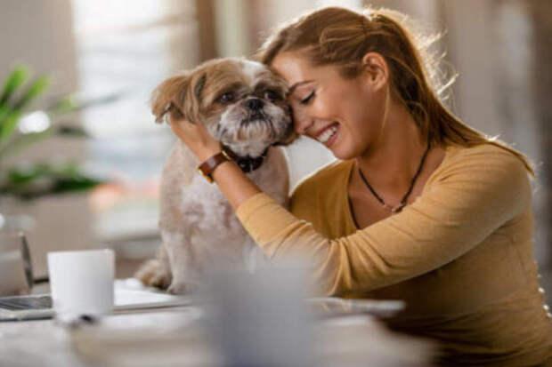 Поглаживание и обнимание собак значительно улучшает самочувствие