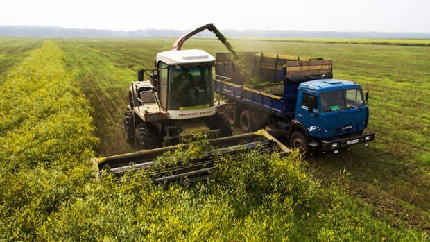 Эксперт: до полумиллиона работников сельского хозяйства могут лишиться работы за 10 лет