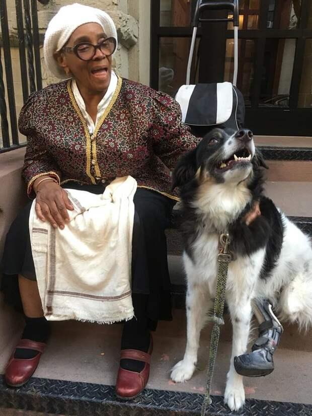 Вы знакомы с чудо-собакой? Жизнь её намучила, однако превратила в совершенно особенного питомца!