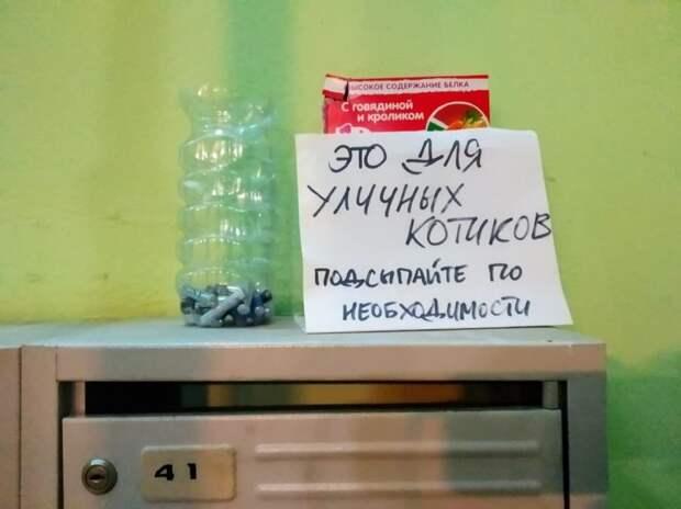 Жильцы дома в проезде Шокальского собирают корм для бездомных кошек