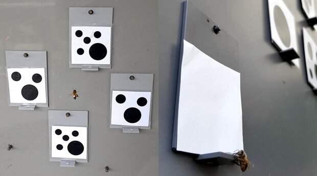 Пчелы продемонстрировали понимание концепции нуля