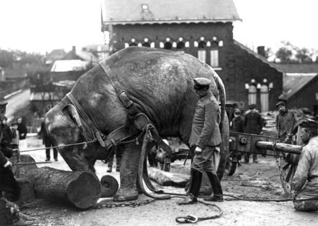 Животные на войне, военные фотографии с животными, звери на войне, солдаты, оружие, война , jurashz.livejournal.com - самый интересный блог