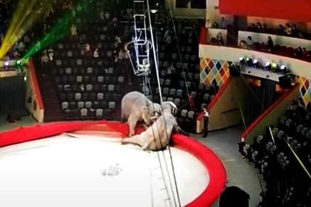 Слоны устроили драку на представлении в казанском цирке