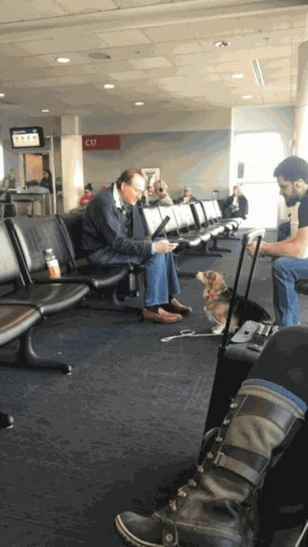 Видео: собака-помощник распознает приступ паники и успокаивает хозяйку поддержка, помощники, служебные собаки, собака друг человека, собаки, специальные, терапия, тренированный пес