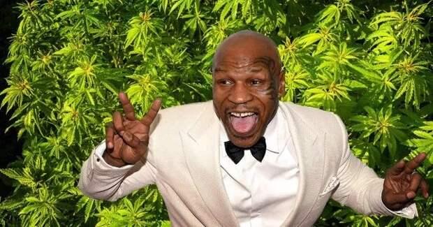Веселый боксер: Майк Тайсон выращивает насвоем ранчо марихуану иугощает еюгостей