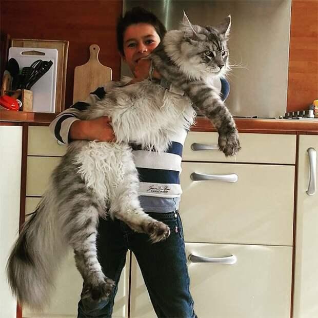 Люди от души откормили котиков, а теперь не знают, как совладать с этими тушками