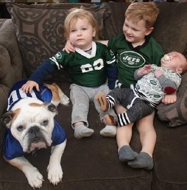 В семье жил пес, но хозяйка боялась, что питомец начнет ревновать к малышу, который должен был родиться