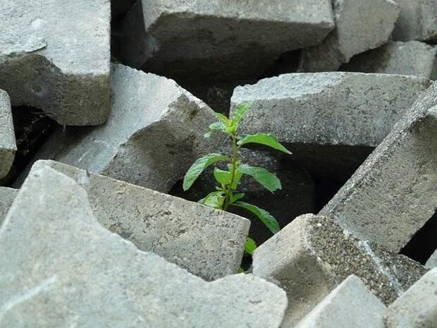 Бетонный блок «невероятной массы» убрали с газона на улице Артюхиной