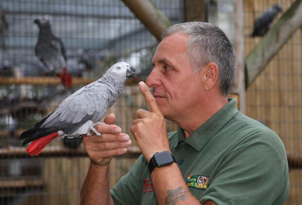 В британском зоопарке попугаям запретили материть публику