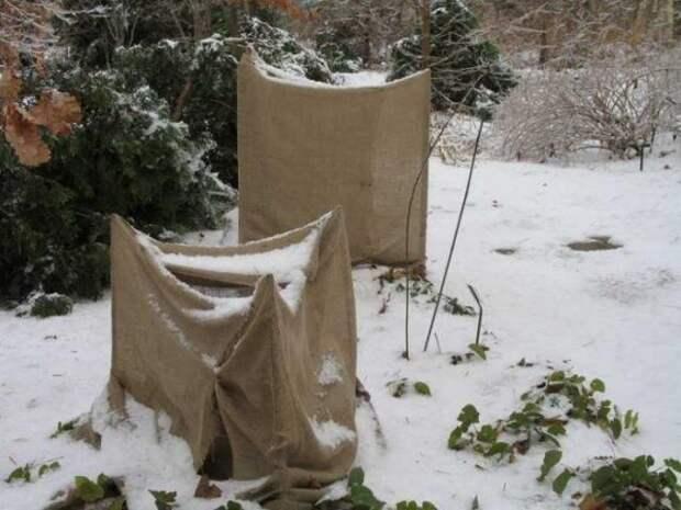 Укрывание растений на зиму