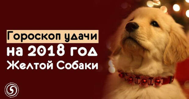 Гороскоп удачи на 2018 год Желтой Собаки