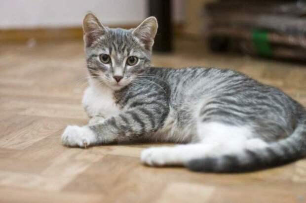 Стерилизация пошла не по плану: кошка стала мамой для котенка, щенка и вороненка