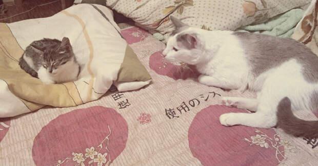 """""""Котик свернулся """"лоскуточком"""" в крышке от офисной бумаги и выключился…"""" Лена и подумать не могла, чтобы выгнать его на улицу снова!"""