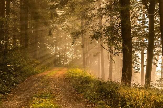 В первый день осени в Удмуртии установится жаркая погода