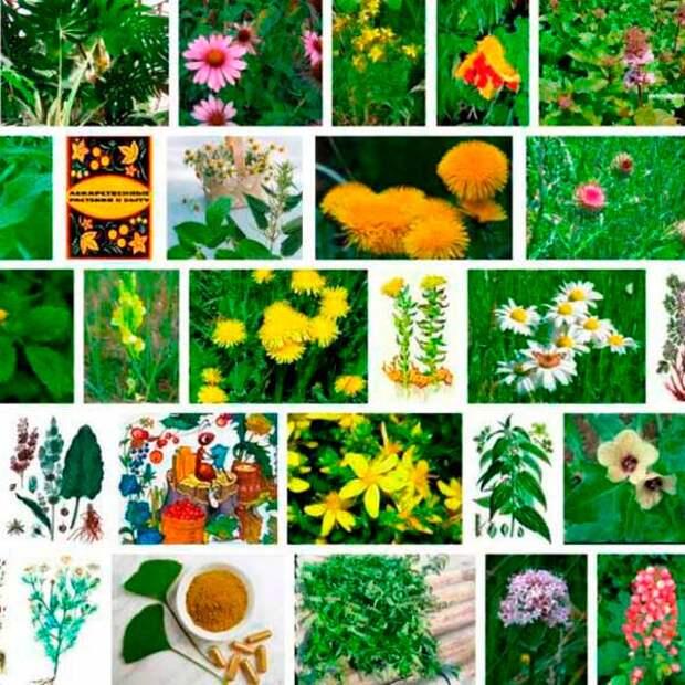 Лекарственные растения всего мира - обзор