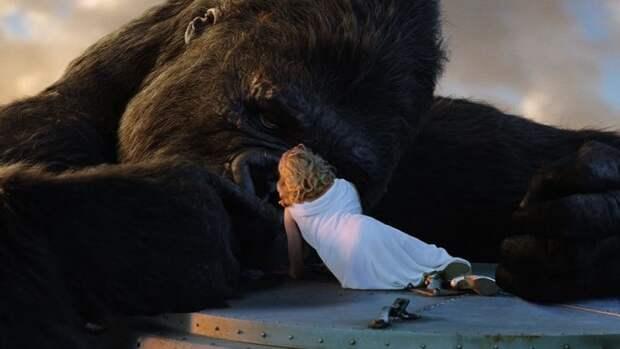 1. Первое заражение ВИЧ произошло из-за секса с обезьяной МИФ И ПРАВДА, животные, животный мир, интересные факты, миф, познавательно, факты о животных