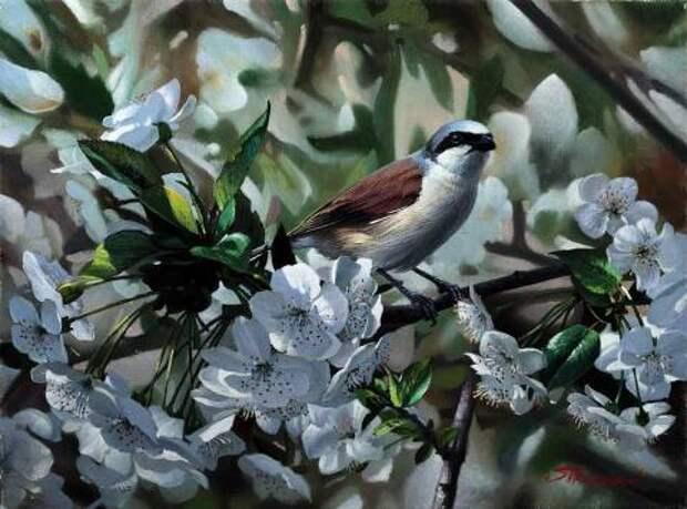 Птаха на вишне