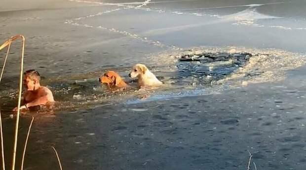 «Для американцев это очень дико». Житель Нью-Йорка Тимофей Юрьев спас провалившихся под лед собак