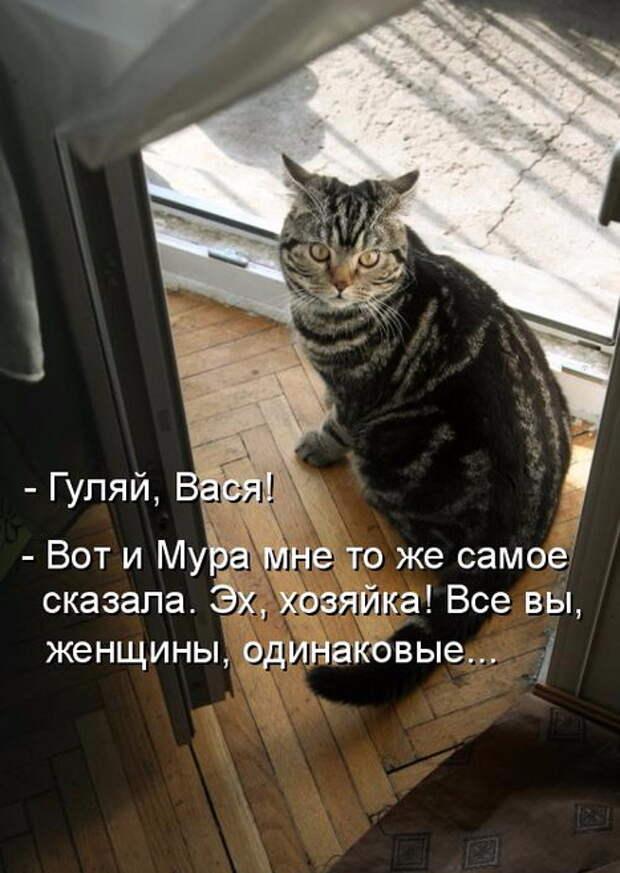 ПЯТНИЦА! Коты рулят!