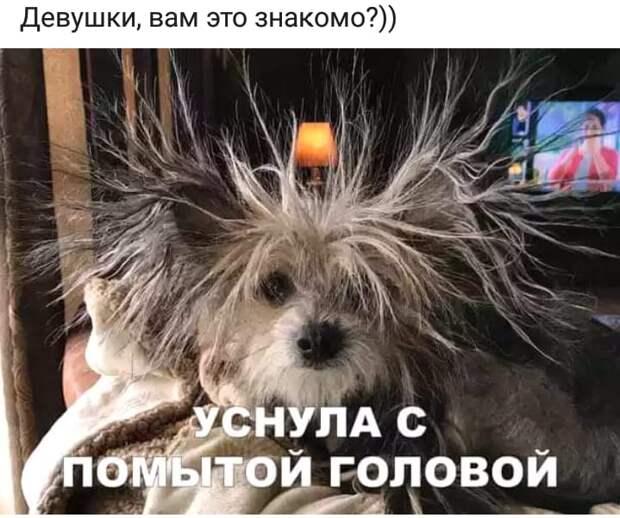 Проблема женщин утром - сделать причёску, накраситься, подобрать туфельки...