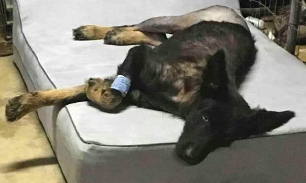 История превращения истощённого существа с переломанным хвостом в добродушного пса в мире, добро, животные, забота, люди, собака, спасение