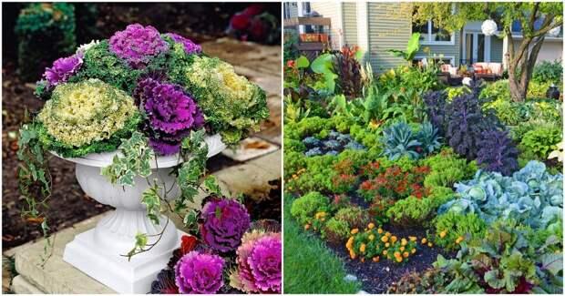 Овощи вместо цветов: клумбы с «изюминкой»