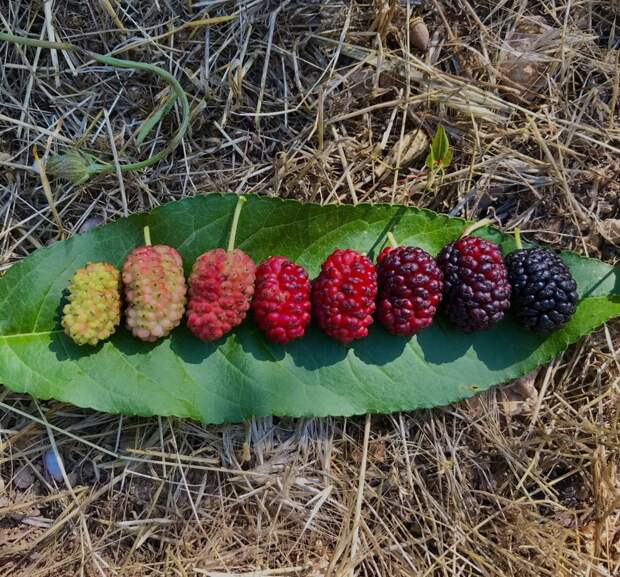 От цветочка до ягодки: как проходит жизненный цикл растений
