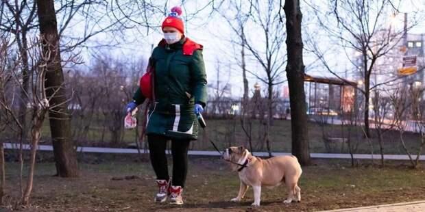 Навеса на площадке для выгула собак в парке на Ходынке не будет