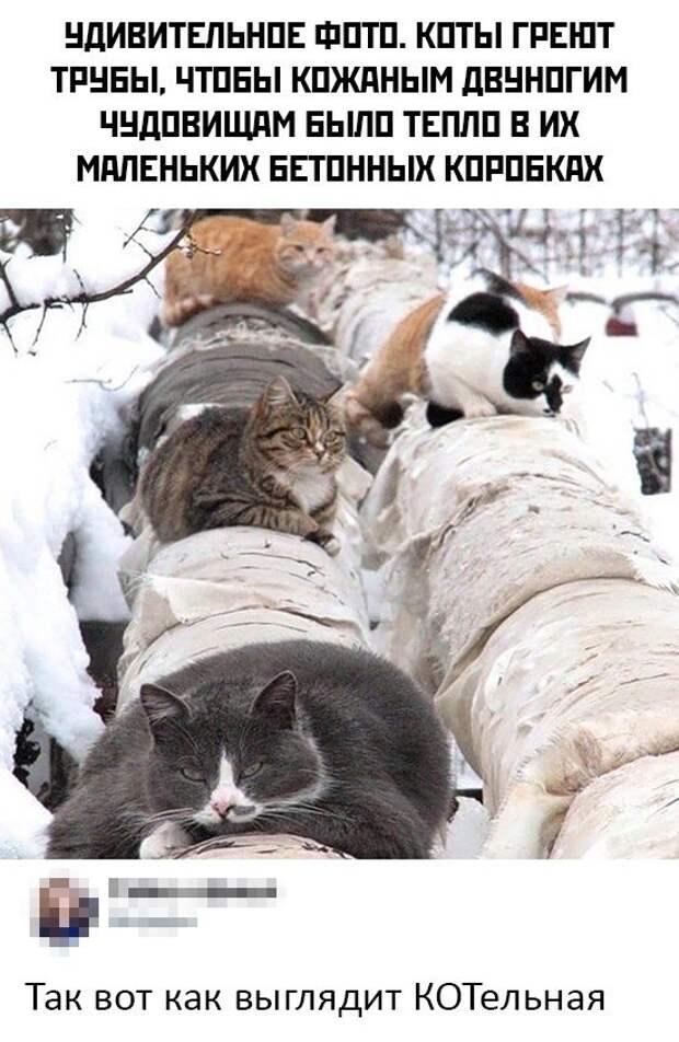 Коты на трубах