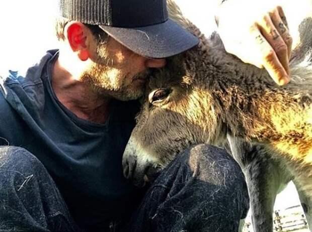 Работники приюта передали животных Моргану, поскольку у него нет корыстных побуждений, и он не гонится за шумихой Джеффри Дин Морган, актер, дружба, животные, осел, спасение, страус, эму