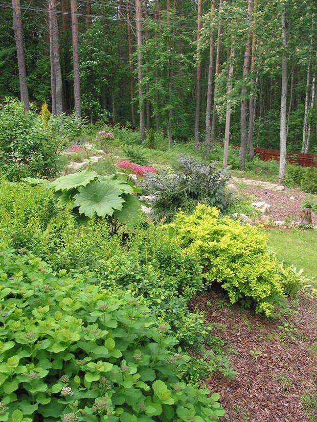 Природный сад часто создается на лесистых участках или неугодьях со сложным рельефом