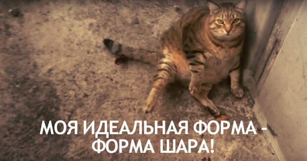 """""""Я толстый and I know it!"""" Упитанный МУРлыка """"выкатился"""" на улицу, чтобы очаровывать прохожих!)"""